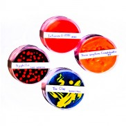 Bacteria Soap in Petri Dish (4 Pack)