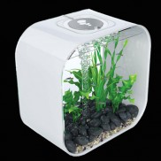 Biorb Life Portrait Square 30l Aquarium