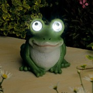 Solar Bright Eyed Frog